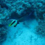 Egypte Hurghada sept 2010 -13