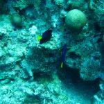 Egypte Hurghada sept 2010 -20