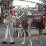 Egypte Hurghada sept 2010 -4