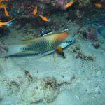 Egypte Hurghada sept 2010 -57