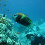 Egypte Hurghada sept 2010 -58