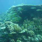 Egypte Hurghada sept 2010 -69