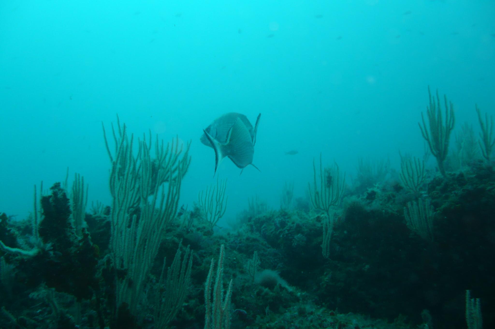 Week end mai 2013 à Cap Cerbere le 09 11-06-30