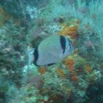 Week end mai 2013 à Cap Cerbere le 09 11-10-47
