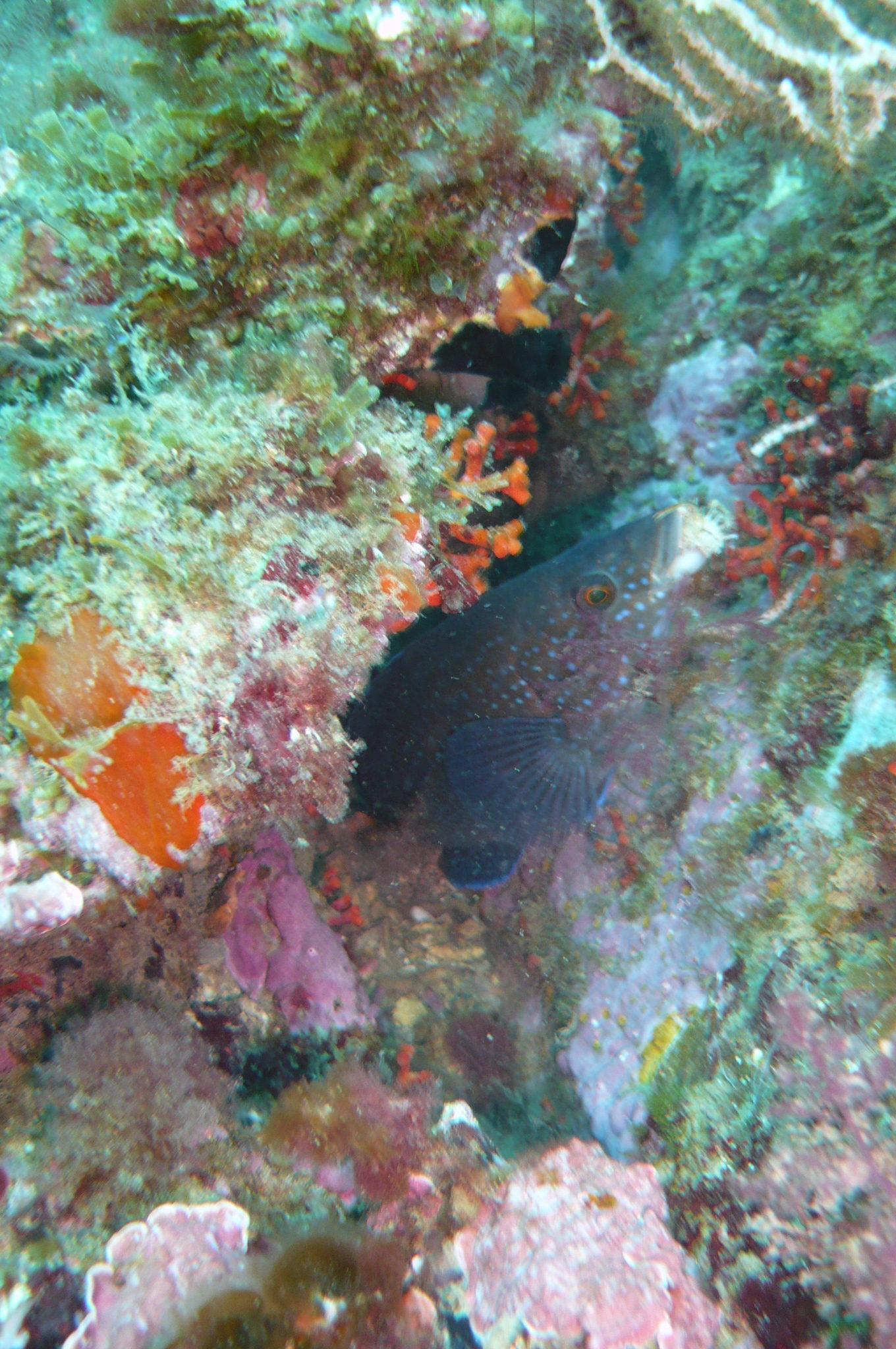 Week end mai 2013 à Cap Cerbere le 09 11-11-28
