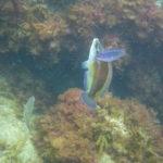 Week end mai 2013 à Cap Cerbere le 09 17-20-05