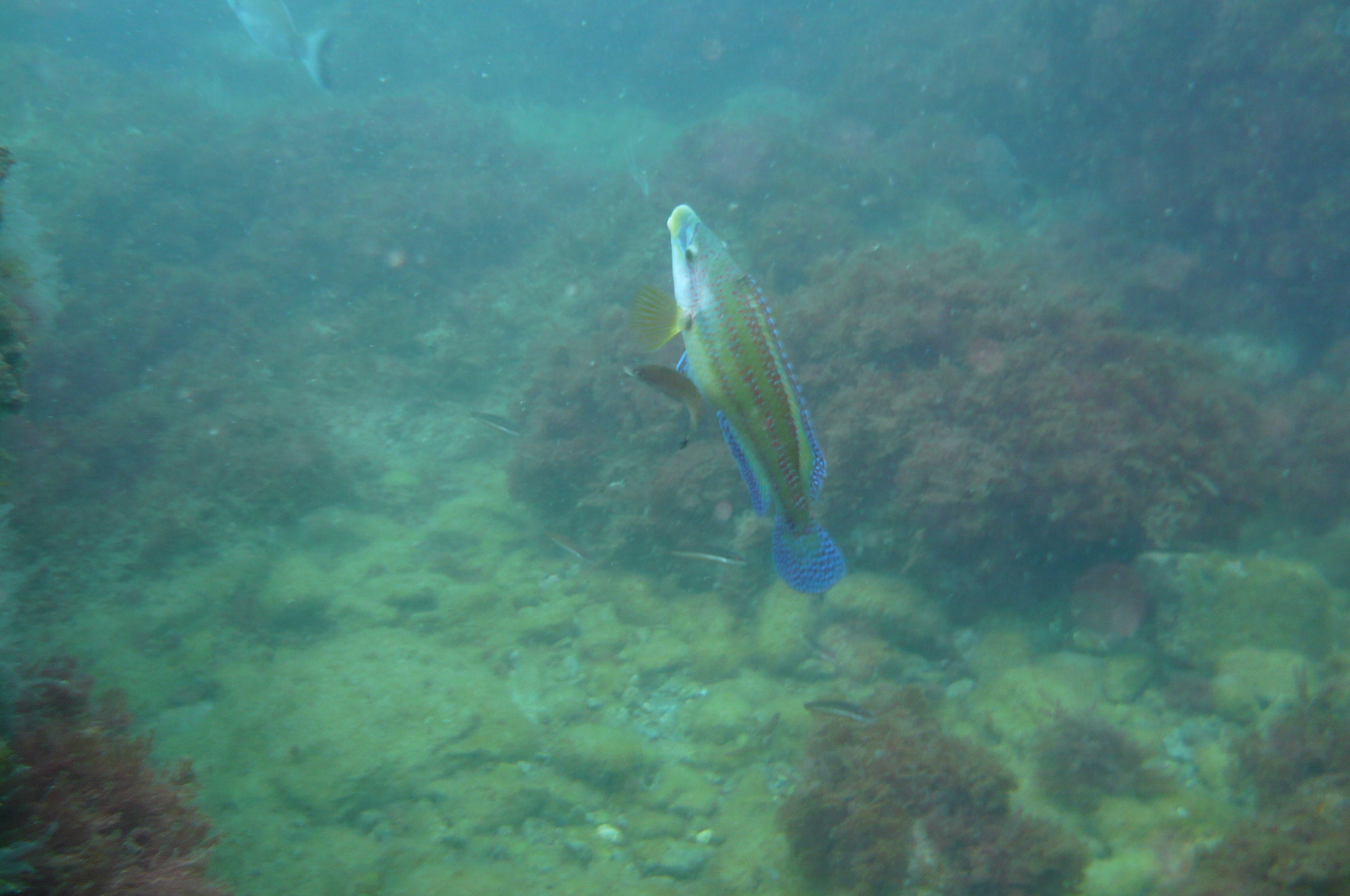 Week end mai 2013 à Cap Cerbere le 09 17-22-50
