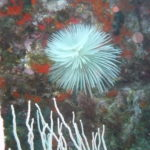 Week end mai 2013 à Cap Cerbere le 09 17-35-33
