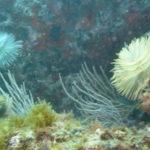 Week end mai 2013 à Cap Cerbere le 09 17-35-52