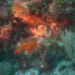 Week end mai 2013 à Cap Cerbere le 09 17-42-03
