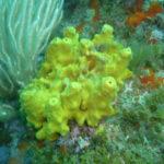 Week end mai 2013 à Cap Cerbere le 09 17-43-26