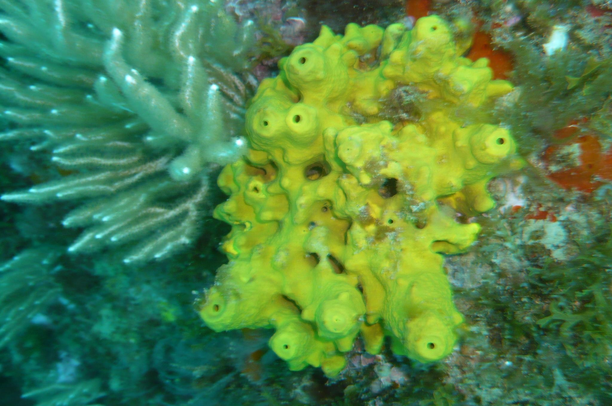 Week end mai 2013 à Cap Cerbere le 09 17-43-32