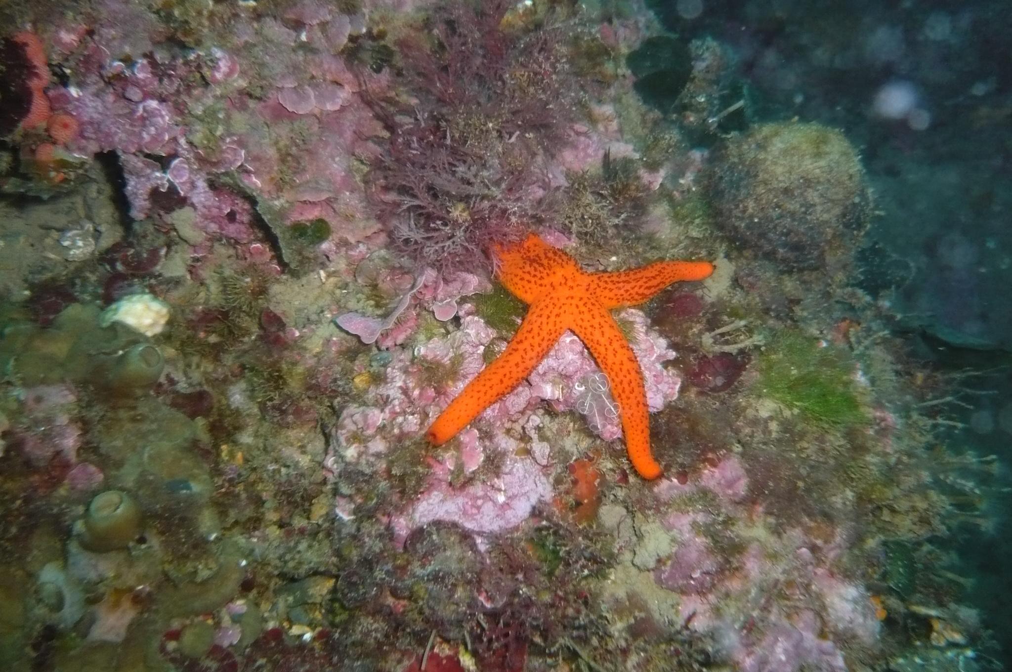 Week end mai 2013 à Cap Cerbere le 10 11-12-34