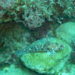 Week end mai 2013 à Cap Cerbere le 11 12-27-22
